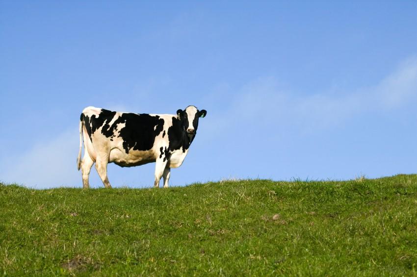 Op zoek naar melkveehouders